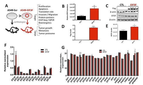 oncogene-image-publication